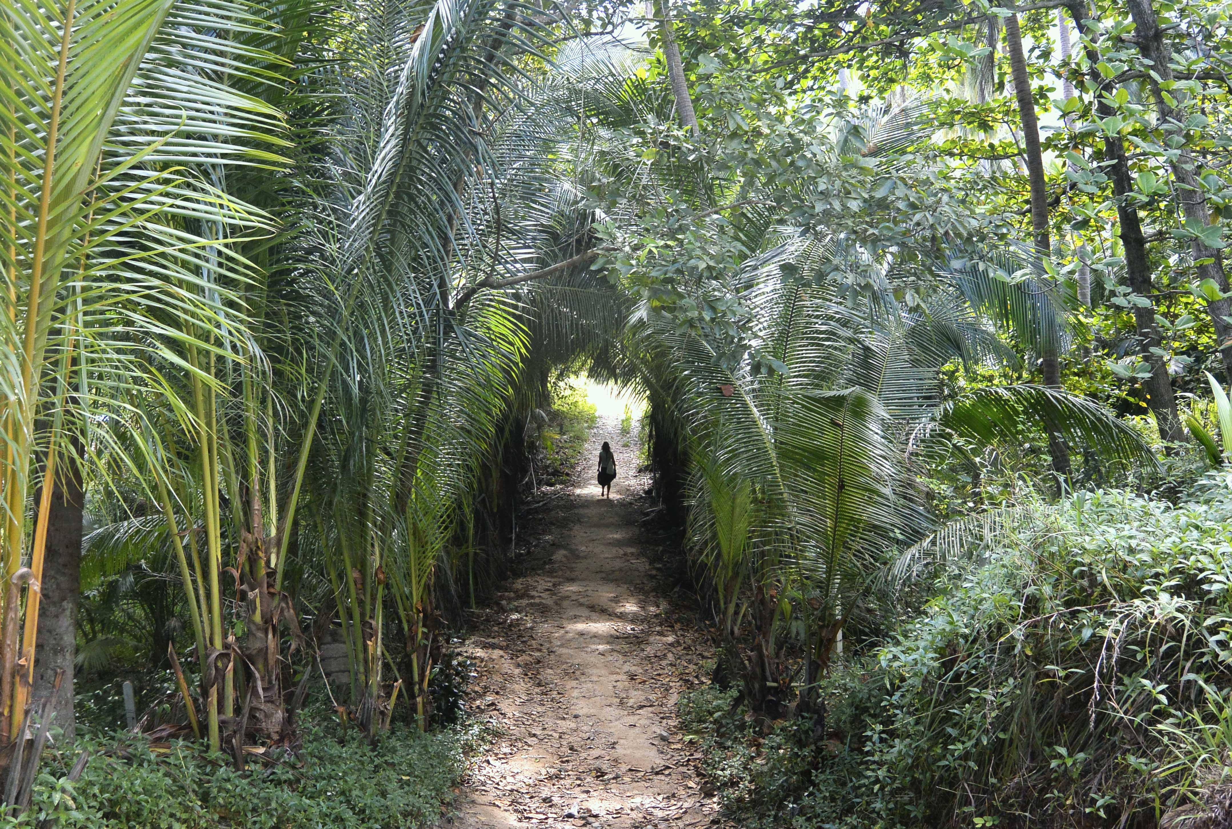 ko-pha-ngan-camino