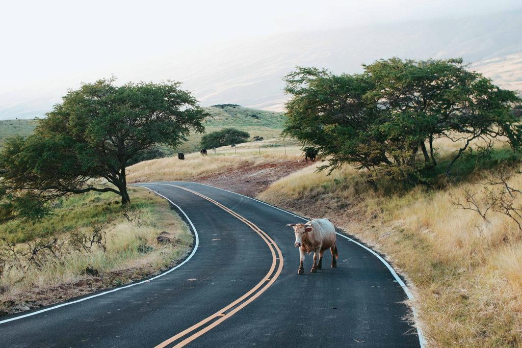 Road trip Hana Maui Hawai