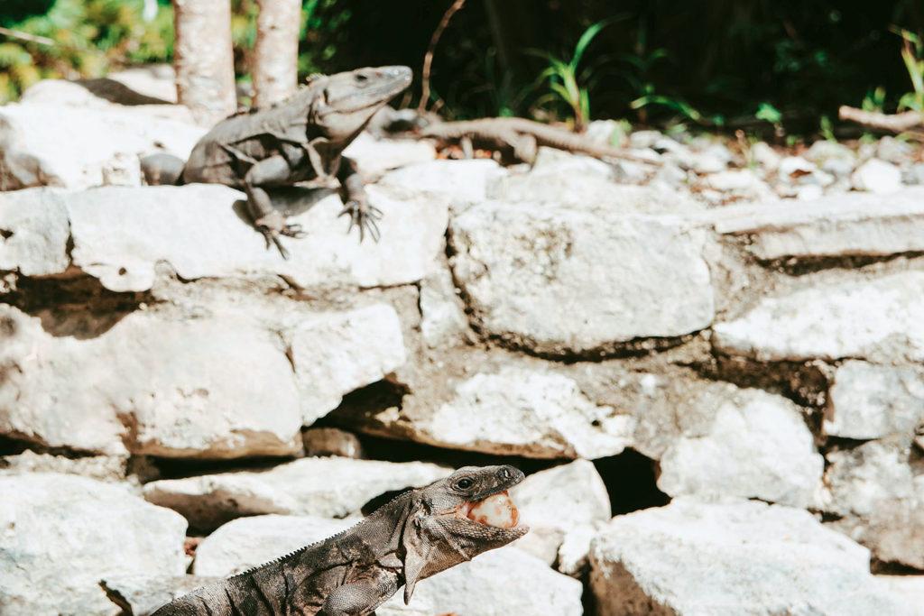 tulum coba tour riviera maya mexico